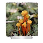 Tiny Orange Mushrooms Shower Curtain