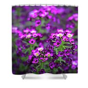 Tiny Purple Flowers Shower Curtain
