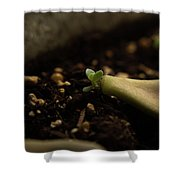 Tiny Succulent Shower Curtain