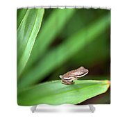 Tiny Tree Frog 01110 Shower Curtain