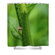 Tiny Warior 1 Shower Curtain