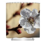 Tiny White Flower Shower Curtain