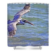 Tip Of The Wing Shower Curtain