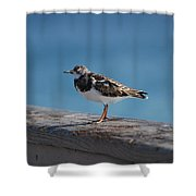Tippi Hedren Shower Curtain