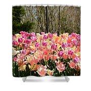 Tiptoe Among The Tulips Shower Curtain
