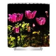 Tiptoe Through The Tulips Shower Curtain