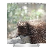 Tired Porcupine On A Fallen Log Shower Curtain