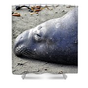 Tired Seal Shower Curtain
