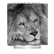 Tired Tango  Black And White Shower Curtain