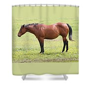 Tired Horse Shower Curtain
