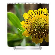 Tithonia Diversifolia Shower Curtain