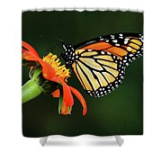 Tithonia Loving Monarch Shower Curtain