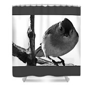 Titmouse Eyes Shower Curtain