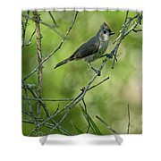 Titmouse In The Brush Shower Curtain