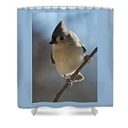 Titmouse Pause Shower Curtain