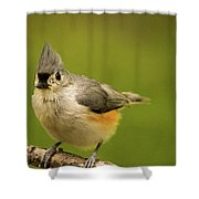 Titmouse Ready To Jump And Fly Shower Curtain