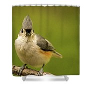 Titmouse Says Here Is Looking At You Shower Curtain