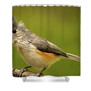 Titmouse With Bad Hairdo 2 Shower Curtain