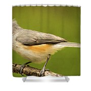 Titmouse With Bad Hairdo 3 Shower Curtain