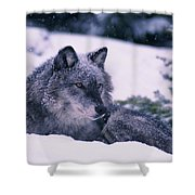 T.kitchin, 19552c Gray Wolf, Winter Shower Curtain