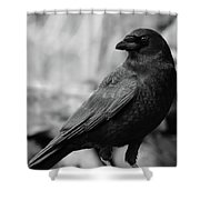 To Be Adored Shower Curtain