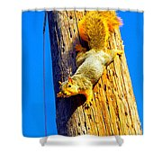 To Squirrels And To Me Shower Curtain by Guy Ricketts