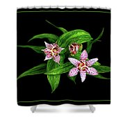 Toad Lily Shower Curtain
