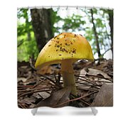 Toad Stool IIi Shower Curtain