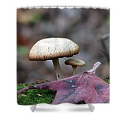 Toad Stool Iv Shower Curtain