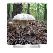 Toad Stool V Shower Curtain