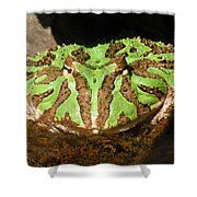 Toad With Green Stripes Shower Curtain