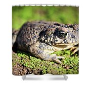 Toad You So Shower Curtain