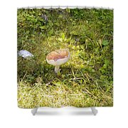 Toadstool Grows On A Forest Floor. Shower Curtain