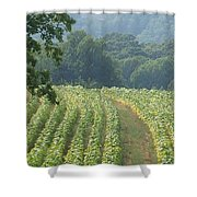 Tobacco  Field Shower Curtain