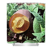 Tobacco Picker Shower Curtain by Jose Manuel Abraham