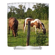 Tobiano And Bay Horses Shower Curtain