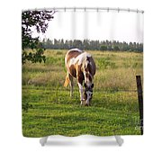 Tobiano Horse In Field Shower Curtain