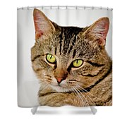 Toby 2 Shower Curtain