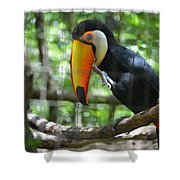 Toco Toucan Shower Curtain