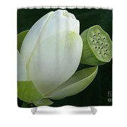 Today And Yesterday Shower Curtain