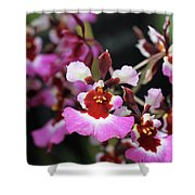 Tolumnia Pink Panther Orchid Shower Curtain