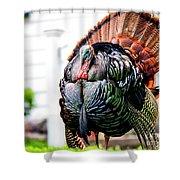 Male Turkey Shower Curtain
