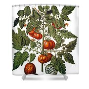 Tomato & Watermelon 1613 Shower Curtain