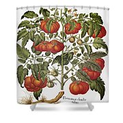 Tomato, 1613 Shower Curtain