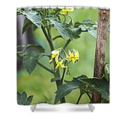 Tomato Flowers Shower Curtain