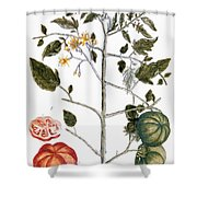 Tomato Plant, 1735 Shower Curtain