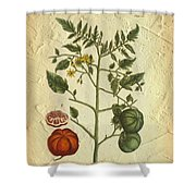 Tomato Plant Vintage Botanical Shower Curtain