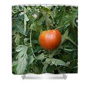 Tomato Plants In A Nebraska Garden Shower Curtain