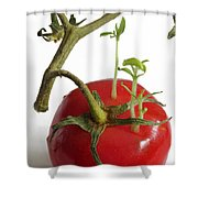 Tomato Seedlings Sprouting Shower Curtain