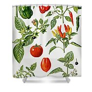 Tomatoes And Related Vegetables Shower Curtain